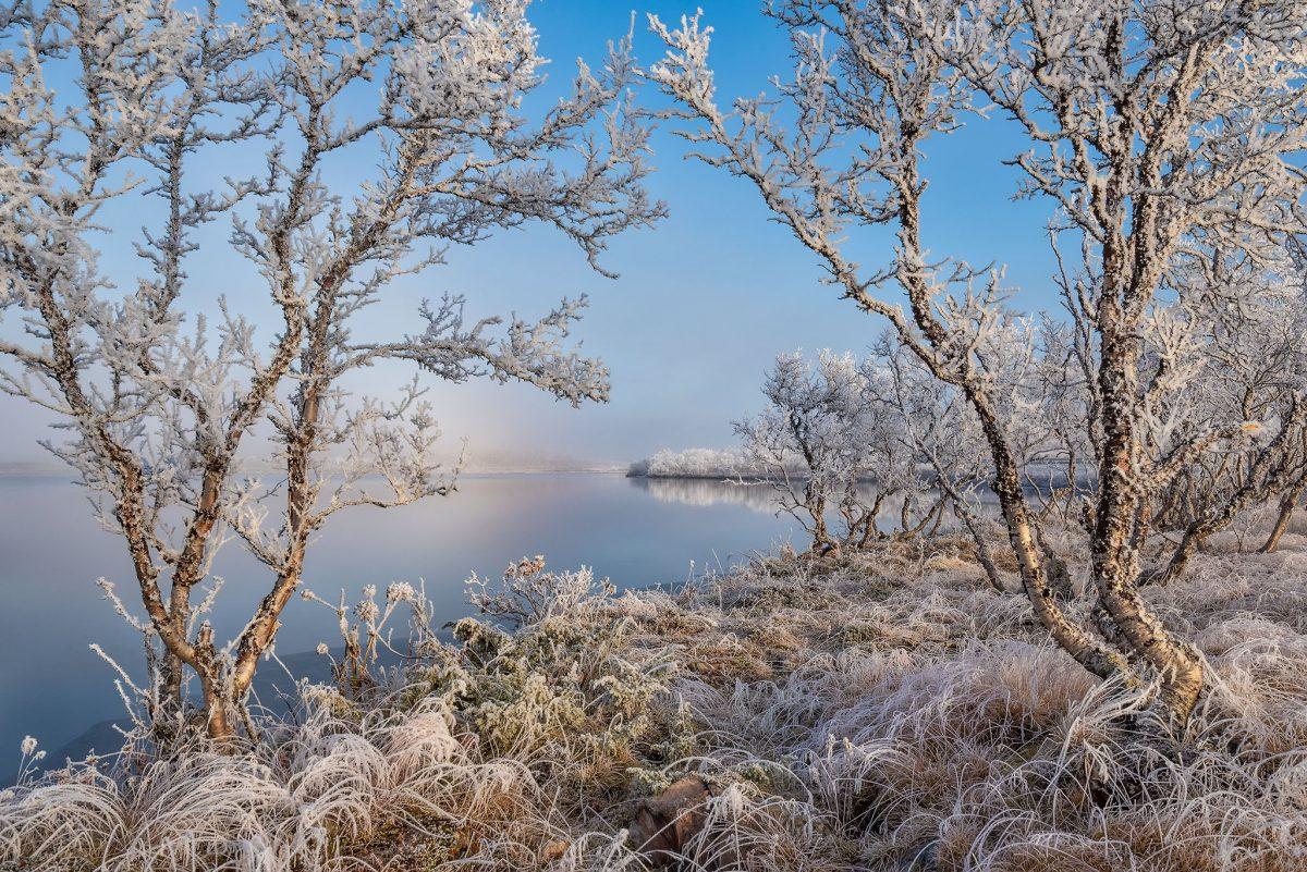 Arktinen valo