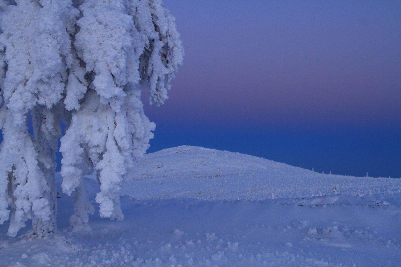 Tykkylumen peittämä puu sinipunaisen sävyisessä tunturimaisemassa.